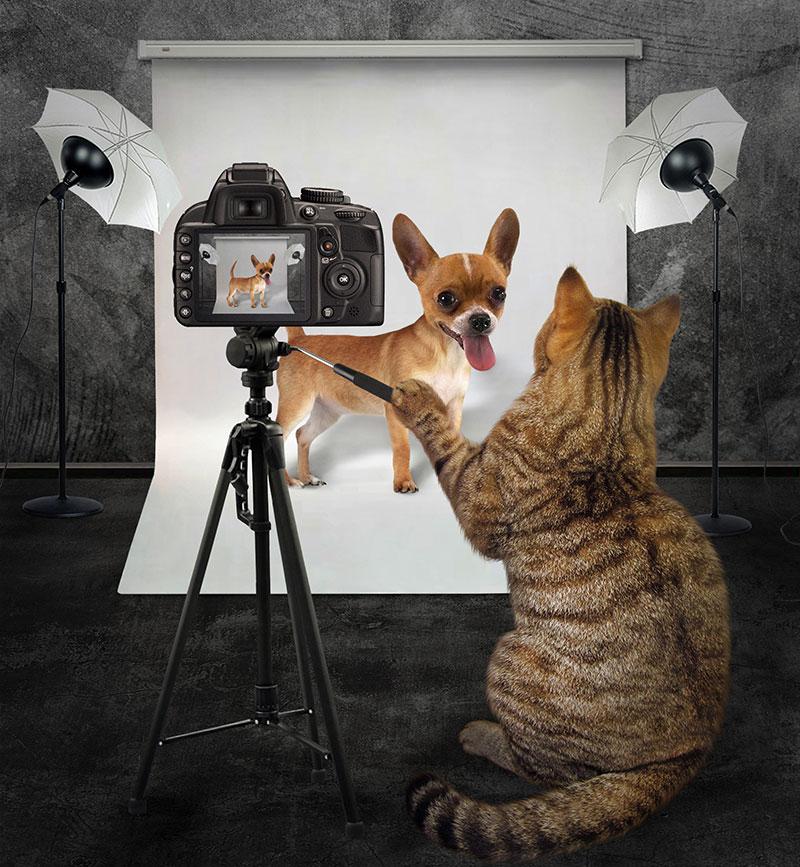 cat taking photo of dog