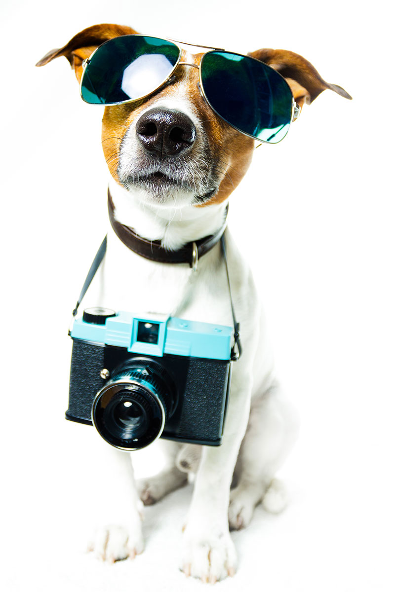 glamour dog with camera